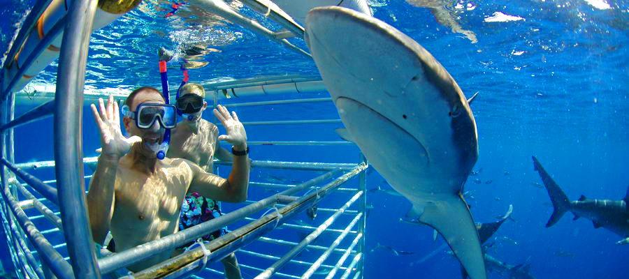 North Shore Sharks Tours