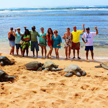 Green Sea Turtles on the Beach