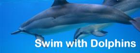 Swim with spinner dolphins