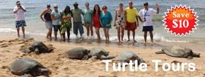 Hawaii Turtle Tours – Circle Island Tour