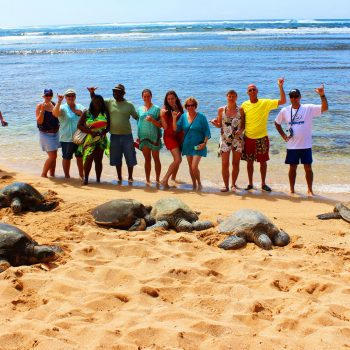 Hawaii Turtle Tour Eco Adventure