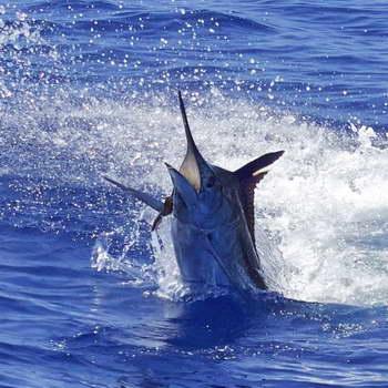 Blue Ocean Waikiki