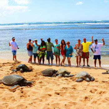 North Shore Turtles